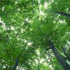 鳥羽院山荘「鳥羽院の名水」 – 佐賀県神埼市脊振町鹿路